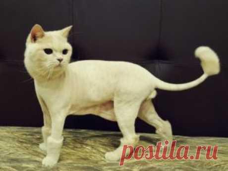 Как подстричь кошку самостоятельно