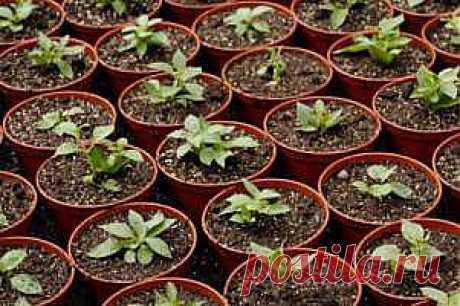 Правильная рассада. Как определить правильные сроки посева семян? | ВСЁ ДЛЯ ДОМА