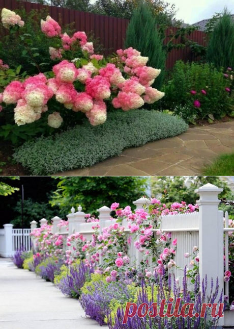 Что посадить вдоль забора: советы опытных садоводов — Дом и Сад