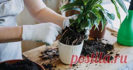 Не только скорлупа: 7 отходов с кухни, которыми можно подкармливать растения Рассказываем, зачем раскладывать на грядках апельсиновые корки, а в посадочные лунки очистки от картофеля.