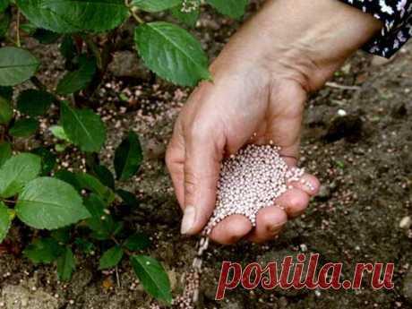 Чем подкормить овощи и кусты для хорошего урожая В июне каждые две недели растениям необходима подкормка. Огурцы, тыкву, томаты, перец подкармливают как по листьям, так и под корень. Лучше подкормку проводить жидкими комплексными удобрениями. Минеральные чередуйте с органическими...