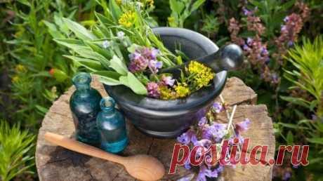 Медики перечислили самые эффективные против гипертонии растения