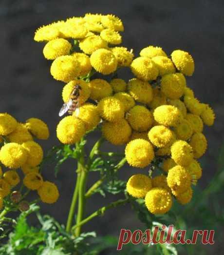 Цветы из фоамирана и глины Марины Ченцовой