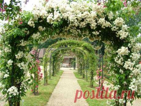 Розарий в саду: элементы регулярного стиля
