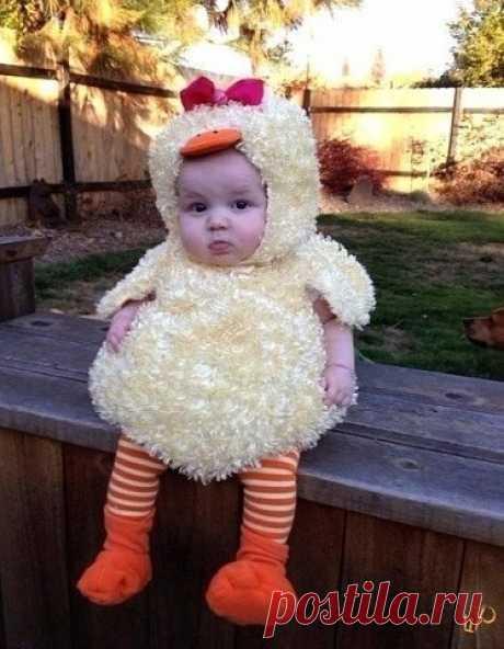 Милейший цыпленок
