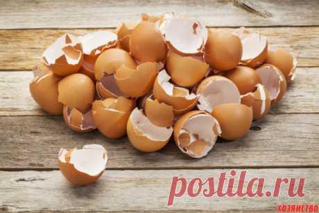 Суперраствор из яичной скорлупы для подкормки рассады