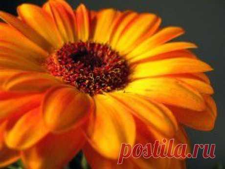 Гидрогель в жизни растений для овощей и цветов от Галки Охапкиной | Самоцветик