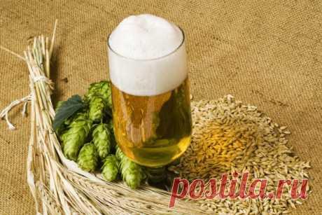 Домашнее пиво из концентрата / Простые рецепты
