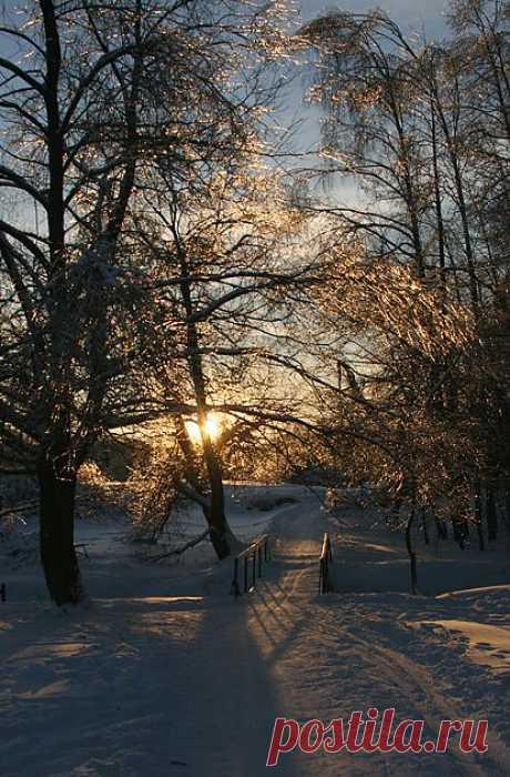 Измайловский парк, Москва. Январь 2011 г.