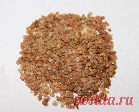 Ботанические семена сортов картофеля Наяда х Фермер