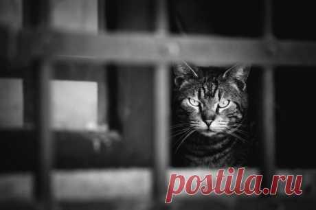 77 изумительных фотографий котов / Питомцы