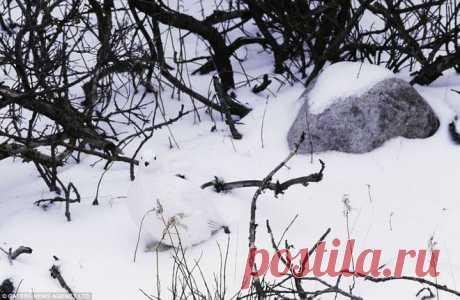 GISMETEO.RU: Сможете найти всех животных на фото? - 6 июня 2019 | События | Новости погоды.