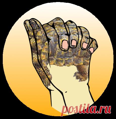 Панцирь черепахи вбирает в себя все жизненные силы и накапливает опыт, который поможет в минуту слабости