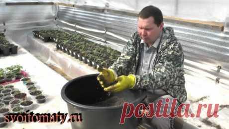 Как выбрать и подготовить покупные грунты для рассады - Яндекс.Видео
