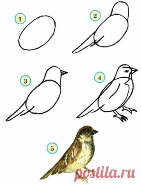 Рисуем птиц — Поделки с детьми