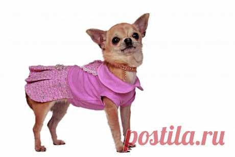 Платье Charlotte's Dress Эленуар для собак – купить недорого в интернет-магазине товаров для собак ЮниЗоо.ру. Отзывы, цены и доставка по Москве и России.