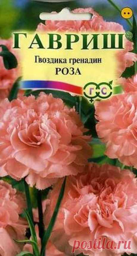 """Гвоздика садовая гренадин """"Роза"""""""