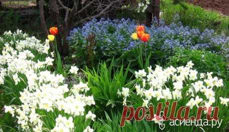 Самые неприхотливые цветы в моем саду: Группа Клумбы и цветники