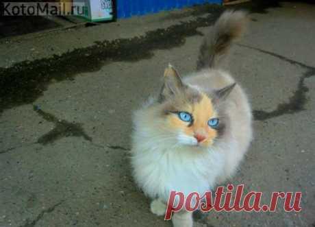 Кошка нереальной красоты