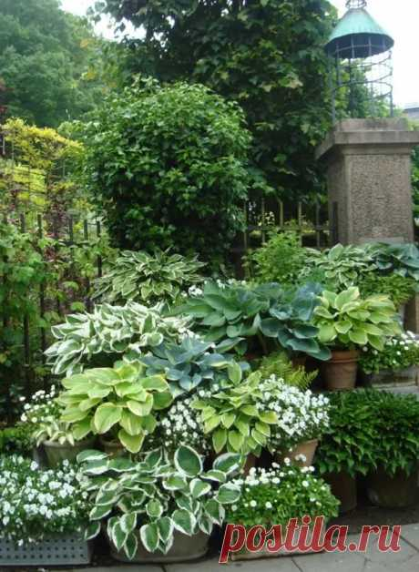 Хоста в ландшафтном дизайне: особенности ухода и гармоничные композиции для сада - Огород, сад, балкон - медиаплатформа МирТесен