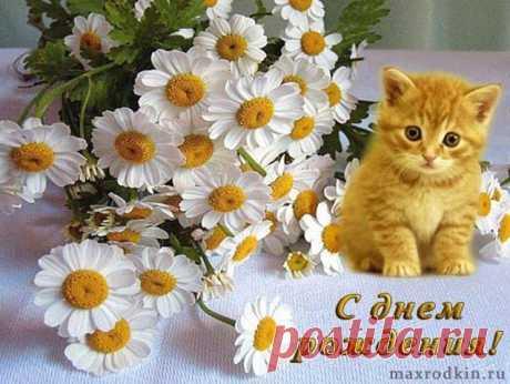 Рыжик в ромашках - милое дополнение к цветам и поздравлению