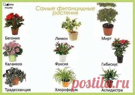 Цветы в детскую комнату   Запоминаем)