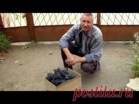 Влагозарядка виноградника осенью