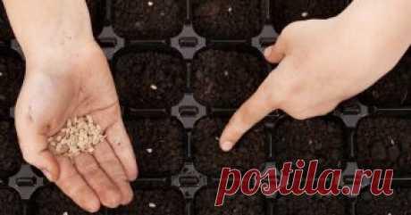 Посев помидоров на рассаду – пошаговая инструкция Подробный мастер-класс с фото, как посеять помидоры на рассаду и вырастить крепкие сеянцы.