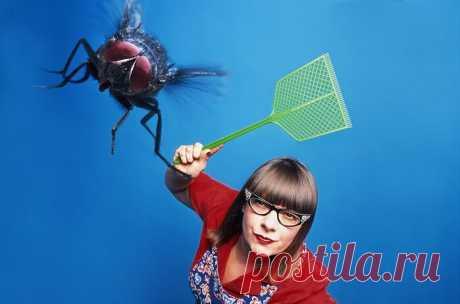 Три копеечных средства, благодаря которым даже при открытых окнах в доме не будет ни мух, ни комаров Наступает самое лучшее время года — поздняя весна и распрекрасное лето. Испортить столь замечательный момент способно одно — вездесущие насекомые — комары и мухи. Кондиционером в доме мы пока не обзавелись, а потому просто вынуждены открывать окна, чтобы в доме был свежо и прохладно. Но в этом случае, в открытые окна беспрепятственно летят и мухи, […] Читай дальше на сайте. Жми подробнее ➡