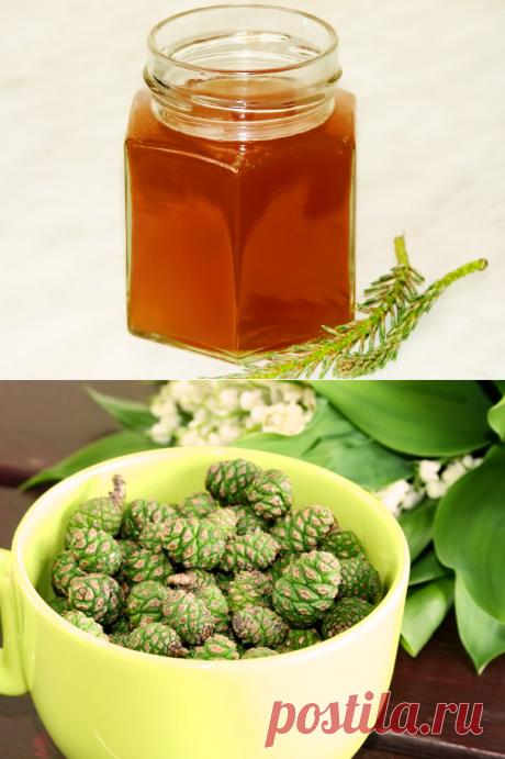 Полезное варенье из сосновых шишек: рецепт с фото