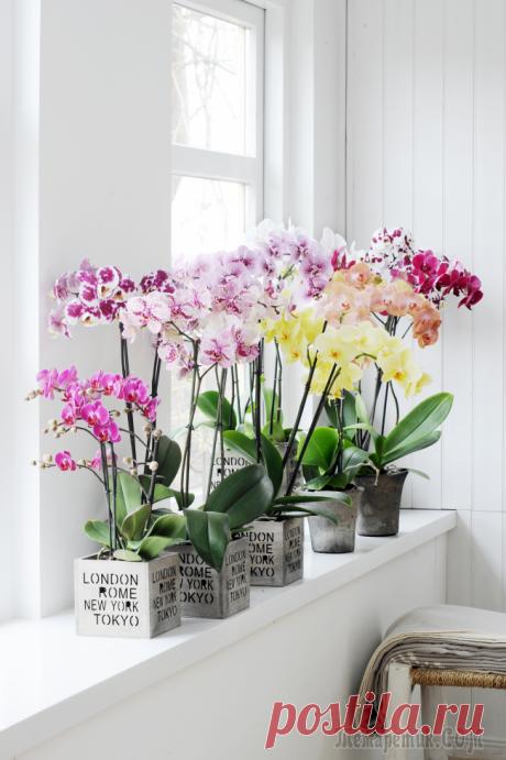Горшочек для орхидеи: определяемся с размерами и все секреты правильного выбора