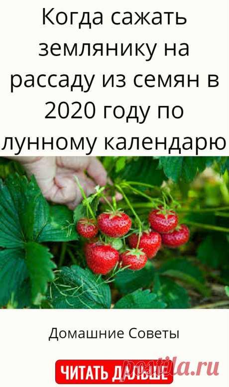 Когда сажать землянику на рассаду из семян в 2020 году по лунному календарю
