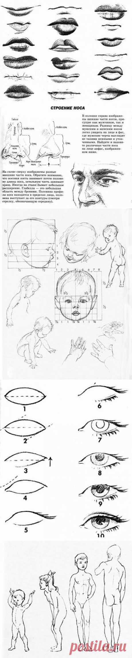 Рисуем человека.