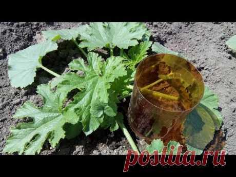 КАК СДЕЛАТЬ КАПЕЛЬНЫЙ ПОЛИВ из пластиковых бутылок - YouTube