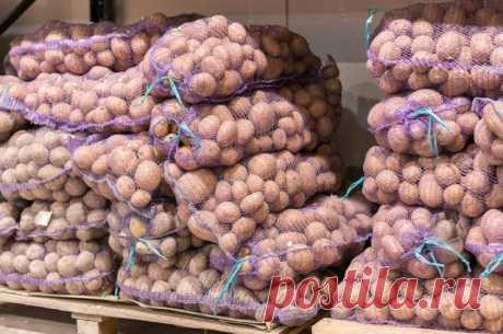Какие продукты резко подорожали в России? В июне заметно подорожала картошка, яблоки, крупы. Зато подешевели лимоны и яйца.