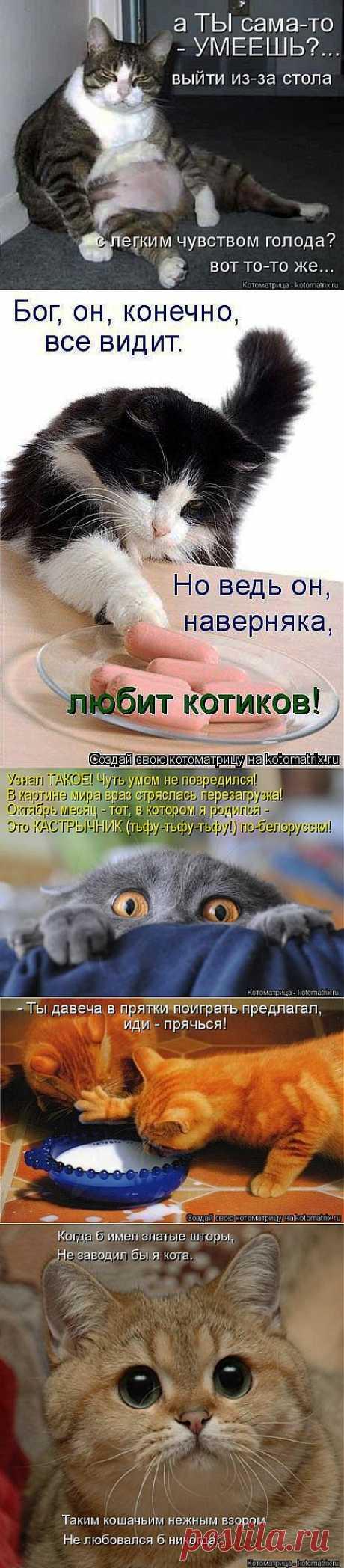 Новый сборник котоматриц | Четвероногий юмор