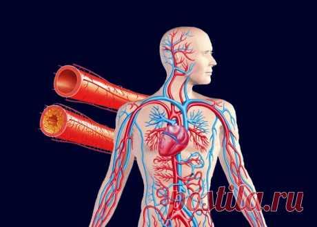 Чистка сосудов домашними средствами Многие люди с возрастом начинают испытывать неприятное ощущение, когда по ночам немеют пальцы рук и ног. Зачастую эти признаки свидетельствуют о развитии атеросклероза кровеносных сосудов.