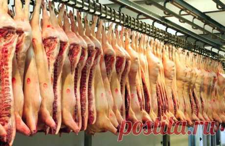 Почему Мусульмане Не Едят Свинину?