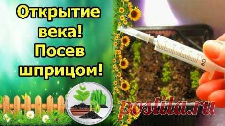 Попробовала Новый способ сеять мелкие семена Петунии - неожиданно оказался Эффективным | Садовый рай 🌱 | Яндекс Дзен