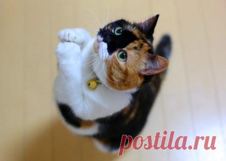 Как отучить кота орать у миски и требовать что-то голосом? | Питомцы Mail.ru | Яндекс Дзен