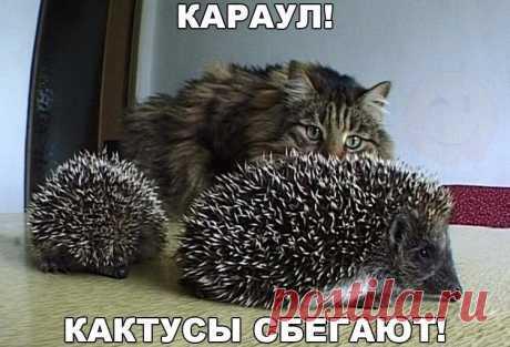 - Хозяйка, держи их!!