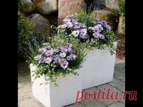 Какие цветы посеять в феврале,марте на рассаду ?