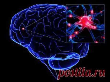 Нервные клетки восстанавливаются! Что любит НС, и чего следует избегать