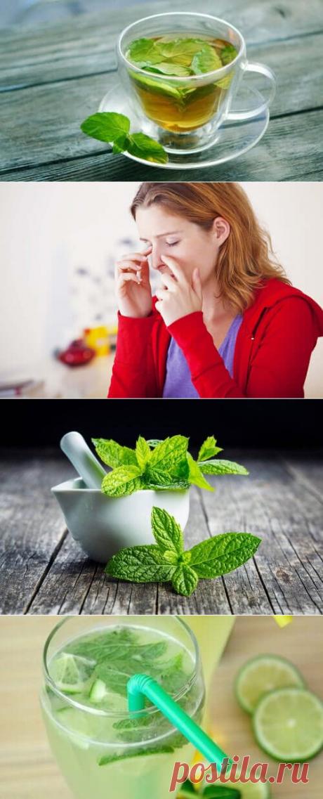 Чай из мяты – откройте для себя его медицинские свойства