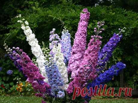 Колоритные цветочные монопосадки — 6 соток