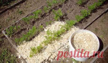 Опилки на грядке - польза или нет? Подавляющее большинство садоводов убеждено в ценности такого удобрения как навоз, хотя при нынешних ценах покупают его совсем немногие, увы, не по карману. А вот о пользе опилок мало кто знает, хотя это весьма ценная органика, которая при правильном применении может обеспечить очень неплохие результаты. В то же время этот органический материал в немалом количестве регулярно появляется у всех, кто с энтузиазмом продолжает заниматься у себя в саду строительными