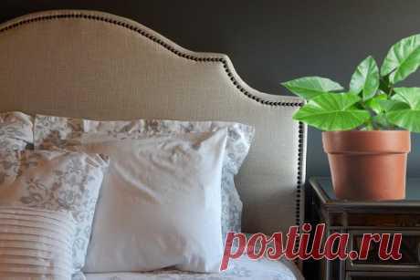 5 домашних растений для улучшения сна   CityWomanCafe.com