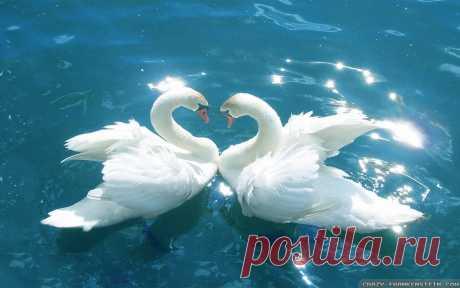 love-birds-wallpaper
