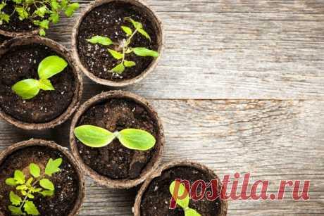 Лунный календарь посева овощей в марте