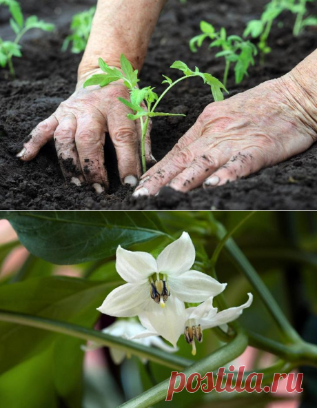 How to look after plants in the greenhouse